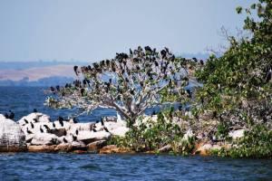 rubondo birds